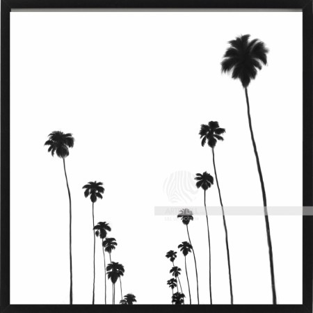 CALIFORNIA DREAMIN´ B&W